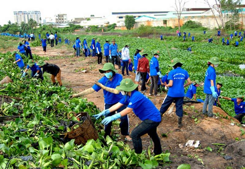 Thanh niên tình nguyện cùng hoạt động dọn lục bình tại sự kiện môi trường nổi bật tại Hải Phòng năm 2019. Các vấn đề nóng và mới nhất cập nhật liên tục... ☎ 0975.404.077 #moitruong #vietnam #Environmental #việtnam #XYLITOL
